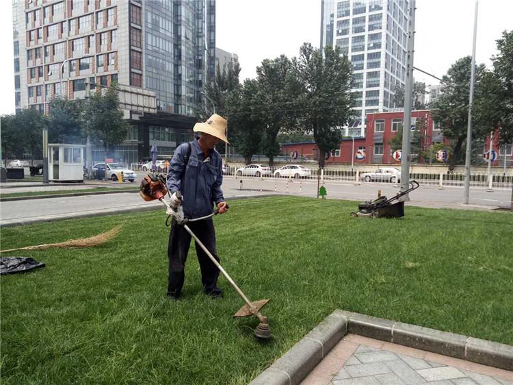 绿化养护现场施工